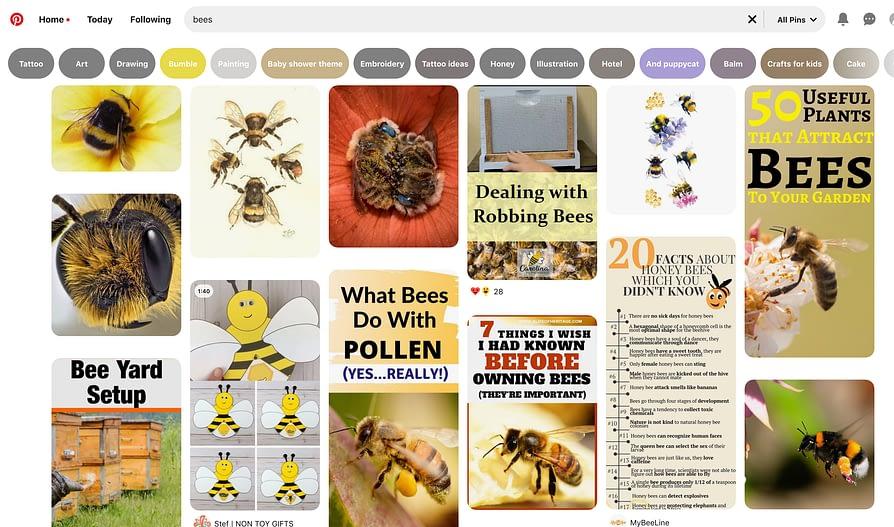 bee facts on pinterest