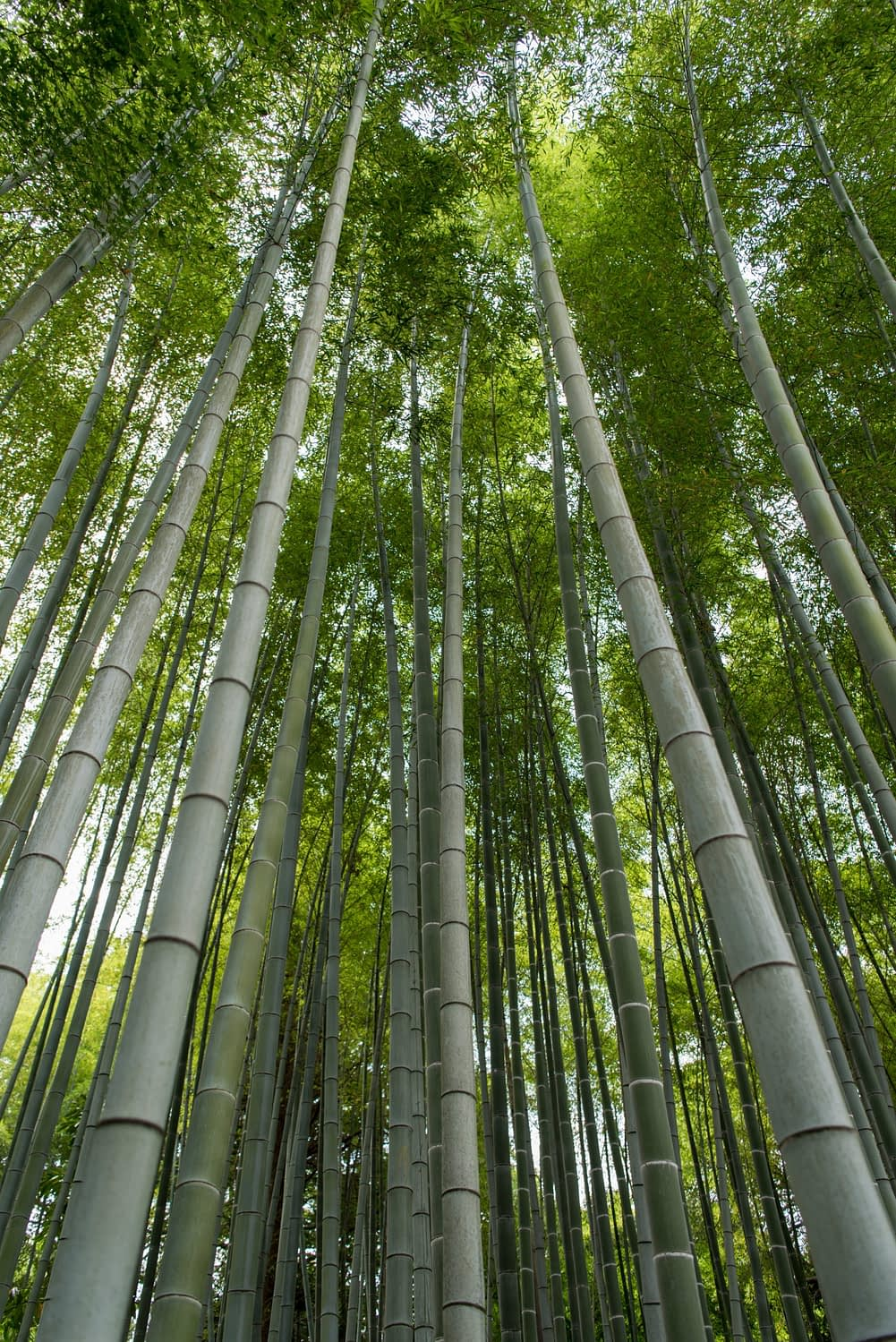 what's the roi of growing bamboo