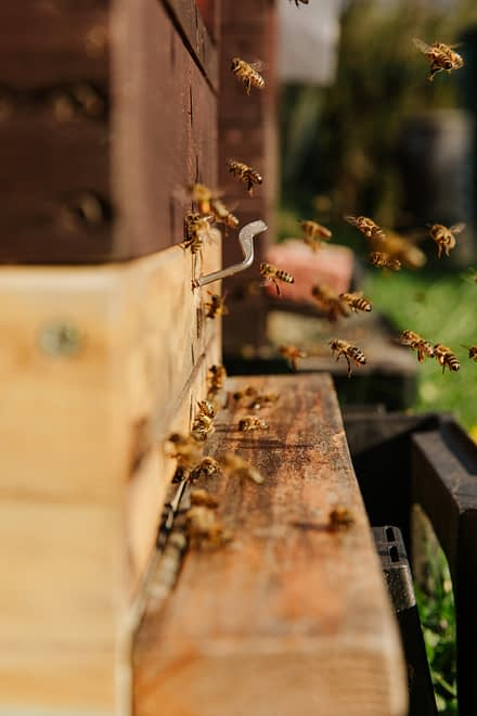 start keeping bees on your farm