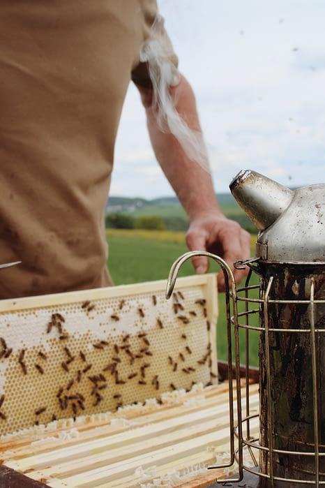 raising honey bees for your farm